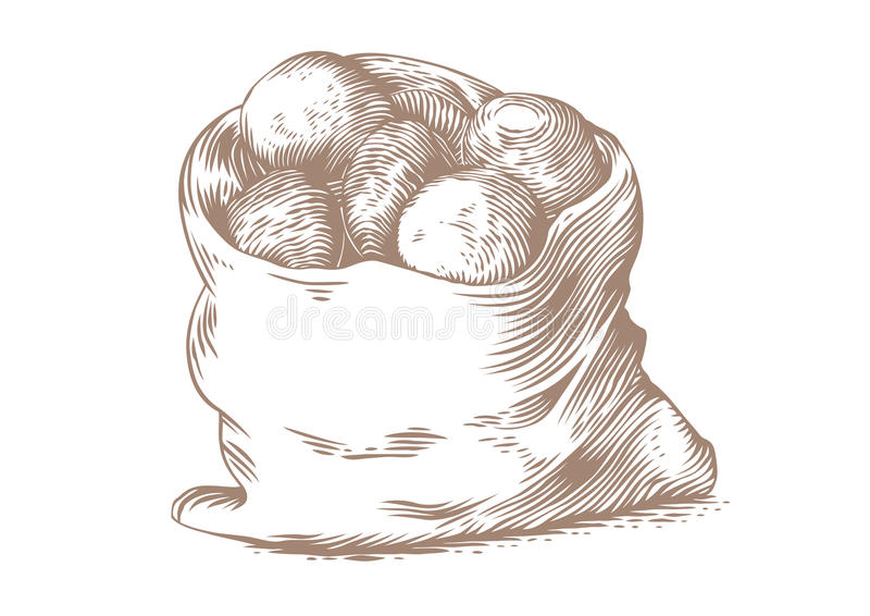 Sack of potatoes. Drawing of sack of potatoes on the white background royalty free illustration