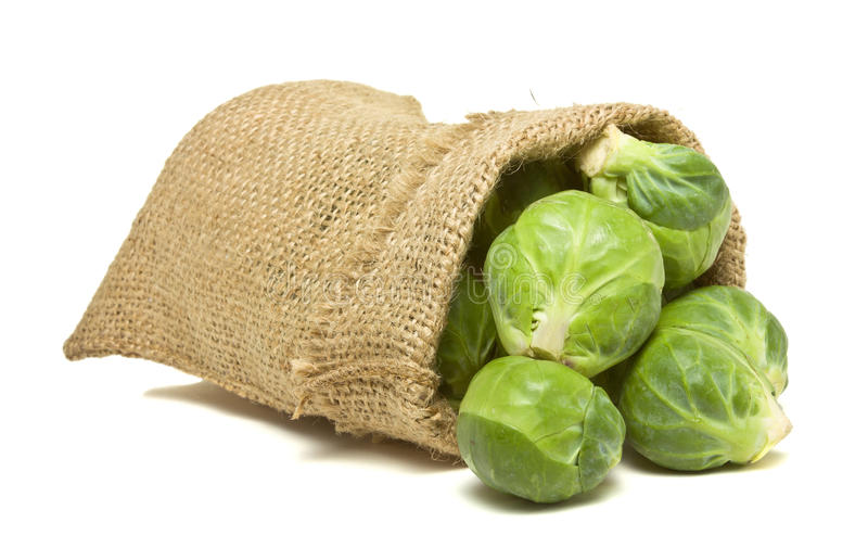 Sack of Sprouts. Sack of Brussel Sprouts from low perspective isolated on white royalty free stock image