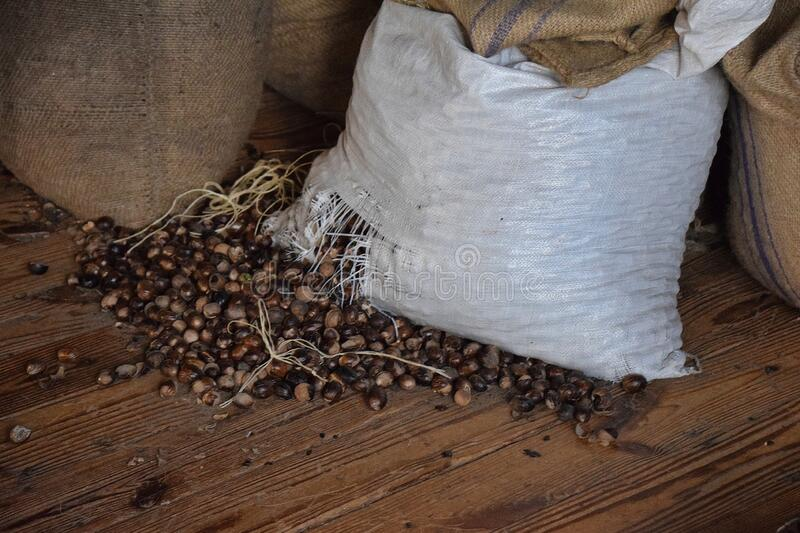Sacks of Nutmeg in a warehouse stock images