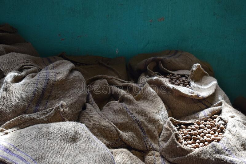 Sacks of Nutmeg in a warehouse stock photography