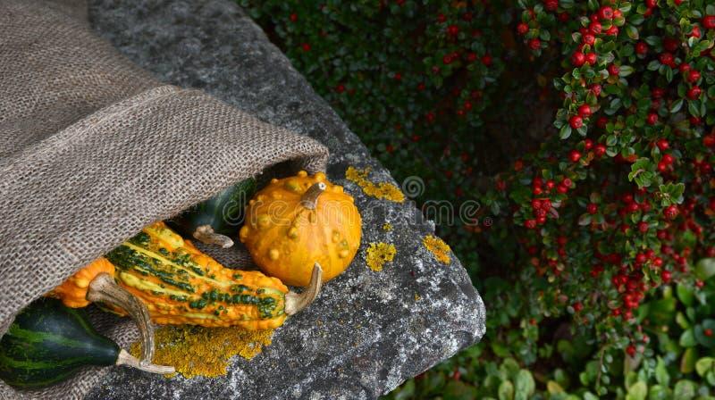 Saco de la arpillera de calabazas anaranjadas y verdes verrugosas inusuales fotos de archivo libres de regalías