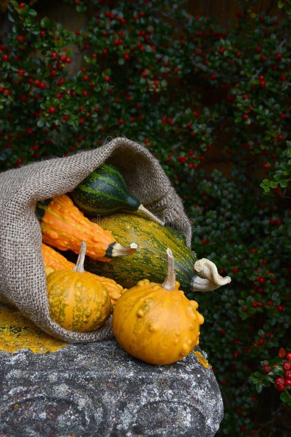 Saco de la arpillera que derrama las calabazas ornamentales verrugosas verdes y anaranjadas fotos de archivo libres de regalías