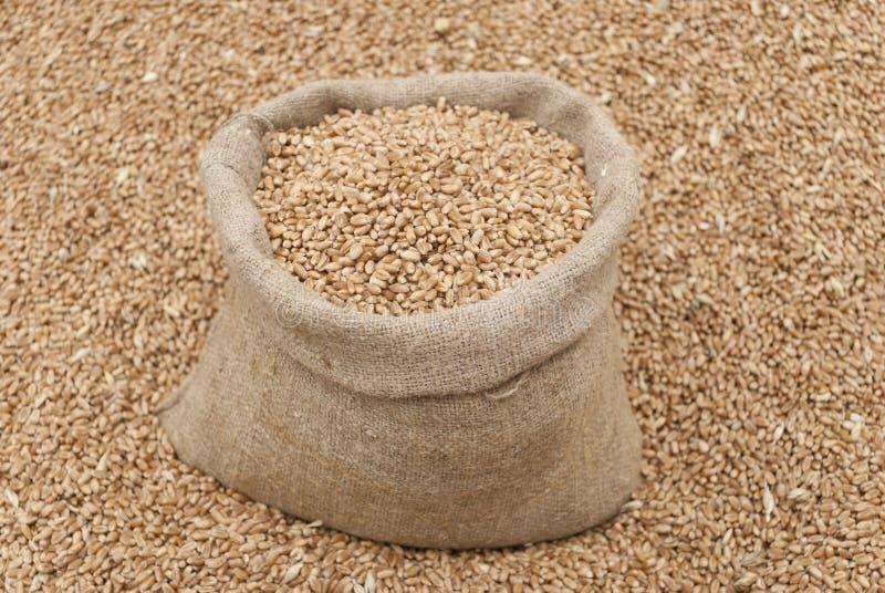 Saco do trigo. fotografia de stock