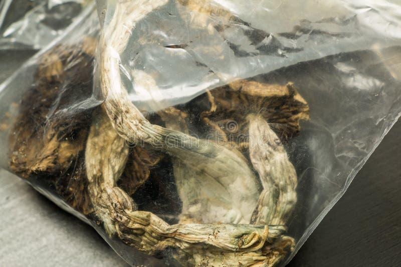 Saco dos cogumelos foto de stock