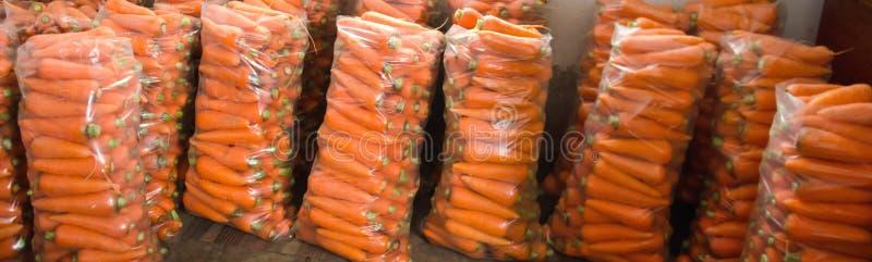 Sacos com a cenoura fresca nova preparada para a venda Colhido recentemente Vegetais org?nicos crescentes Agricultura e cultivo U fotos de stock