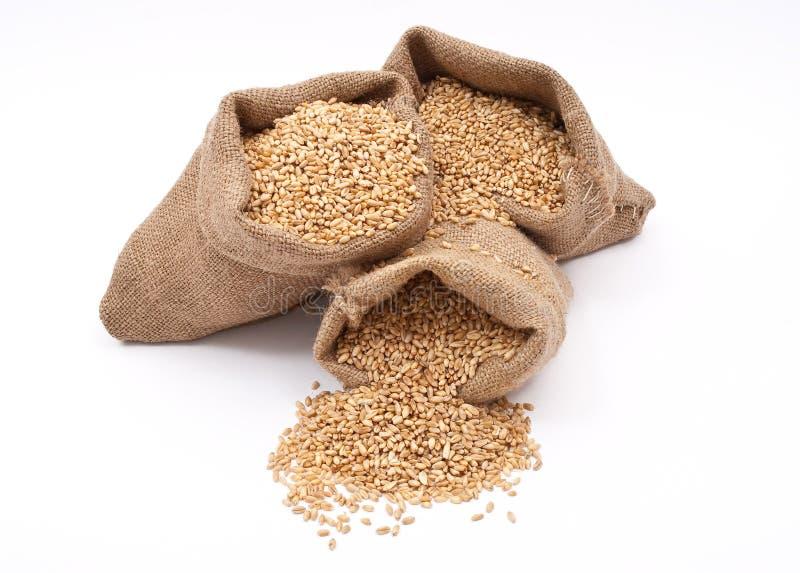 Sacos de grões do trigo imagens de stock royalty free