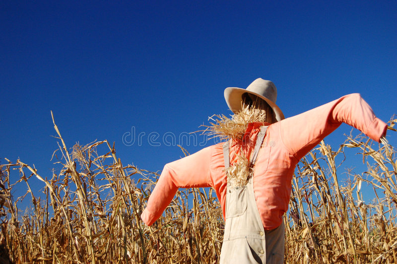Download Sacrecrow stock photo. Image of dead, harvest, fall, grow - 3154384