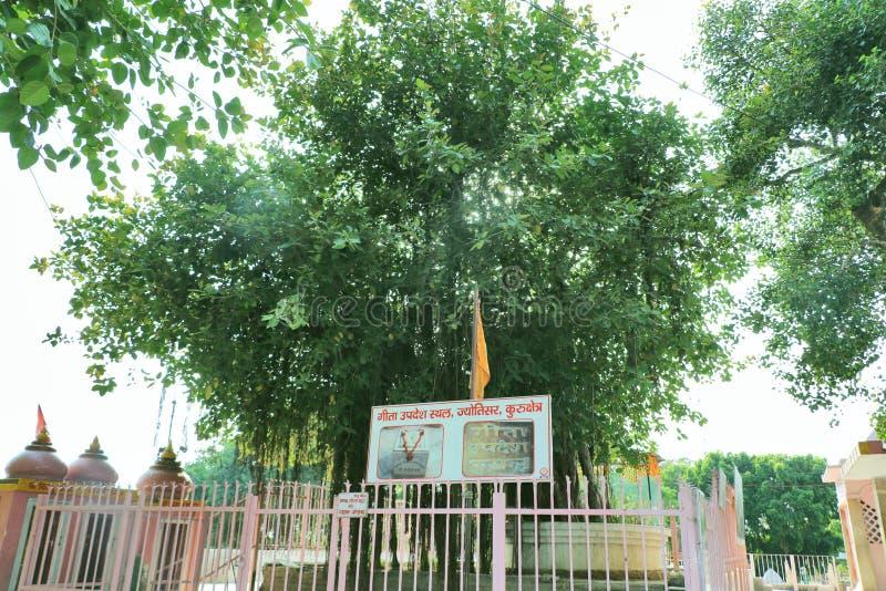 The sacred banyan tree at Jyotisar, Kurukshetra. India under which Lord Krishna delivered sermon of Bhagavad Gita to Arjuna to remove his dilemma & prepared stock image