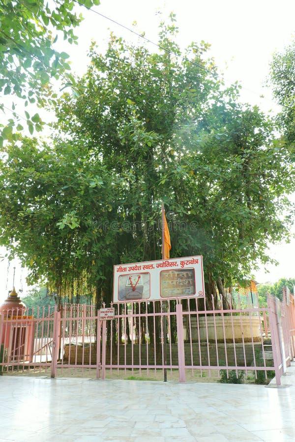 The sacred banyan tree at Jyotisar, Kurukshetra. India under which Lord Krishna delivered sermon of Bhagavad Gita to Arjuna to remove his dilemma & prepared royalty free stock photo