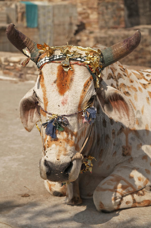 Free Sacred Cow Royalty Free Stock Photo - 9809735