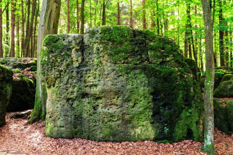 Sacred Druid Grove stock photos