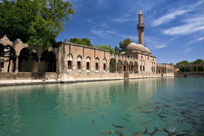 Download Sacred Fish Pool stock photo. Image of sanliurfa, architecture - 23761160