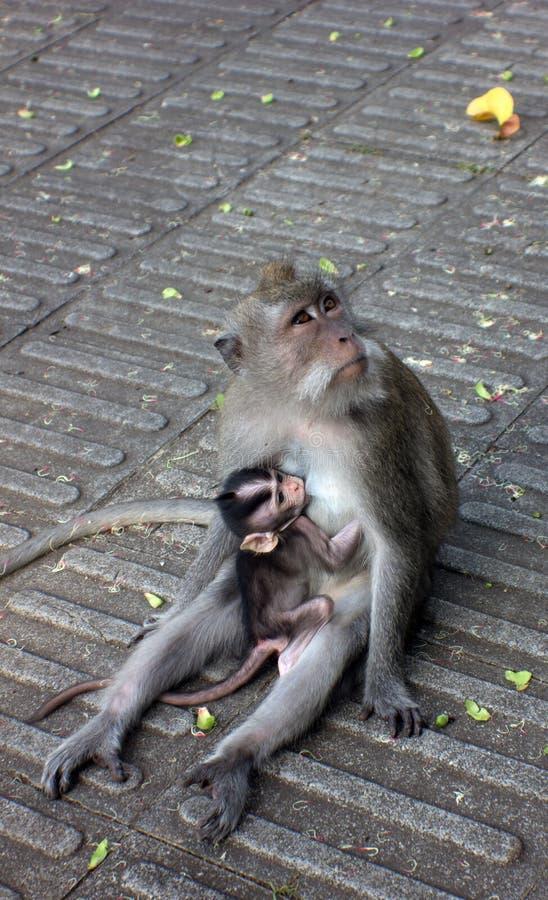 Sacred Monkey Forest Sanctuary stock image