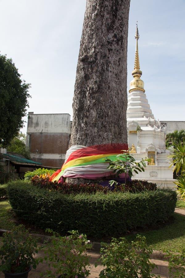 The sacred tree of Atsuta-jingu Shrine royalty free stock photos