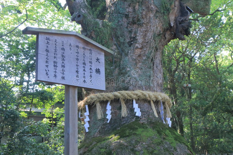 Sacred tree in Atsuta Shrine Nagoya Japan stock photography