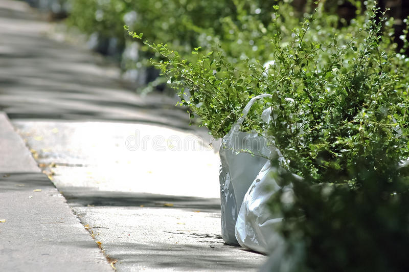 Sacs de nouveaux arbres à planter photo stock