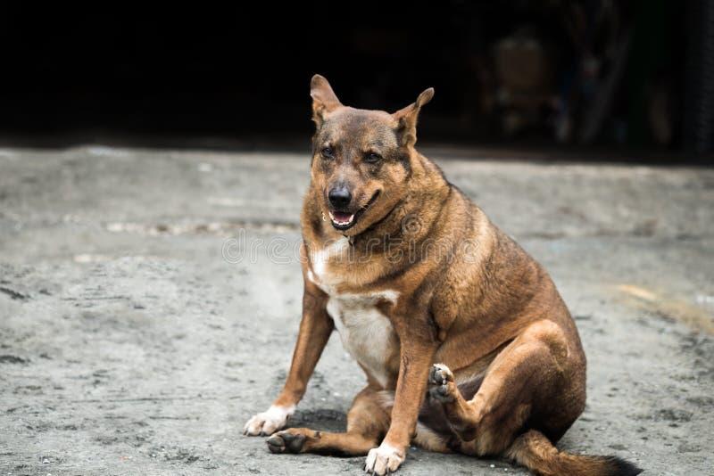 Sadła psi obsiadanie zdjęcia stock
