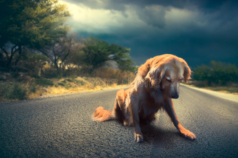 Sad, abandoned dog in the middle of the road /high contrast image royalty free stock images