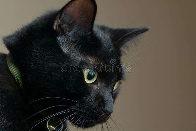 Sad black cat stock photo