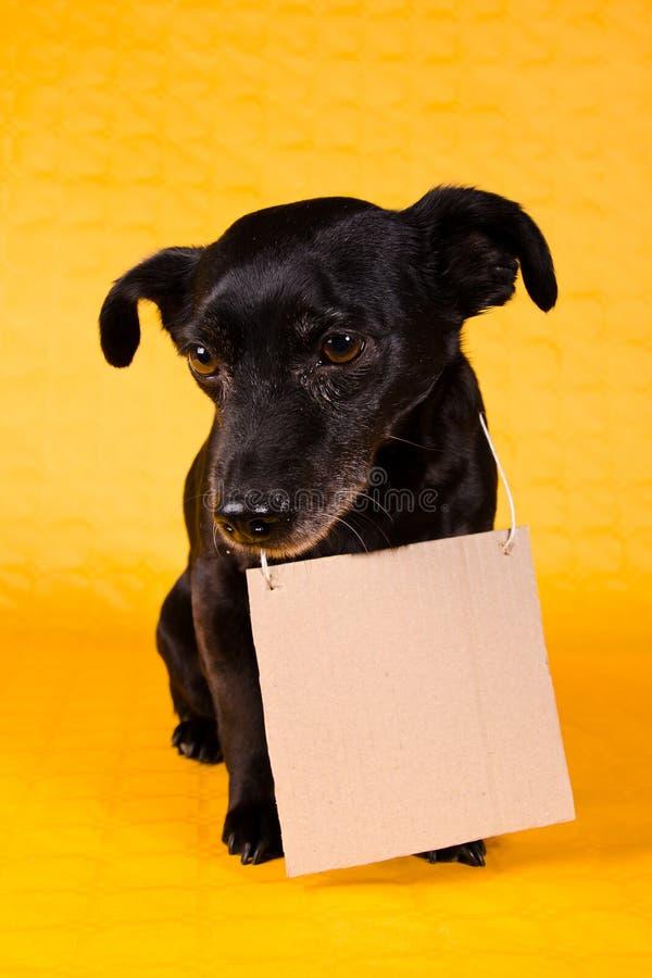 Sad black terrier