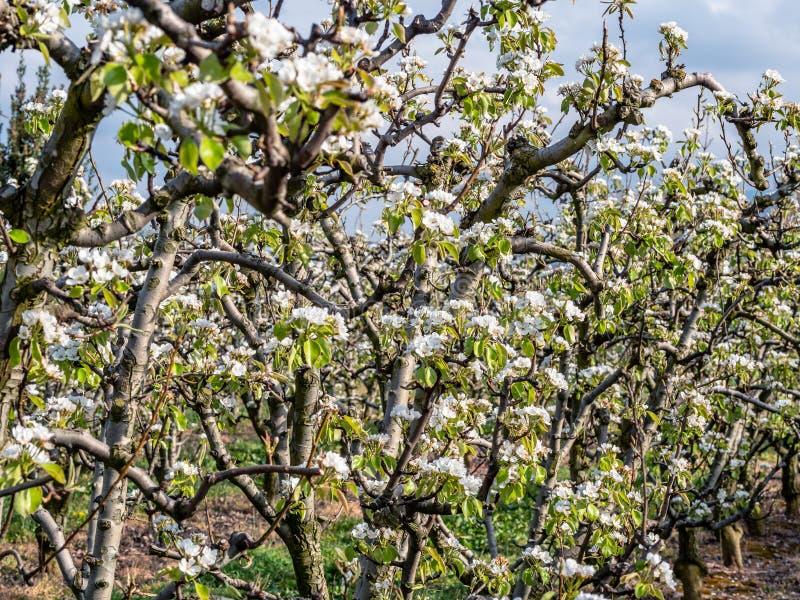 Sad bonkrety w kwiacie z niebieskim niebem zdjęcie royalty free