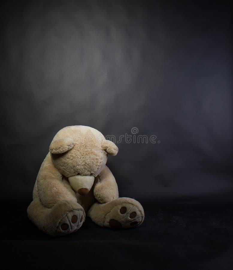 Sad bruin stock photography