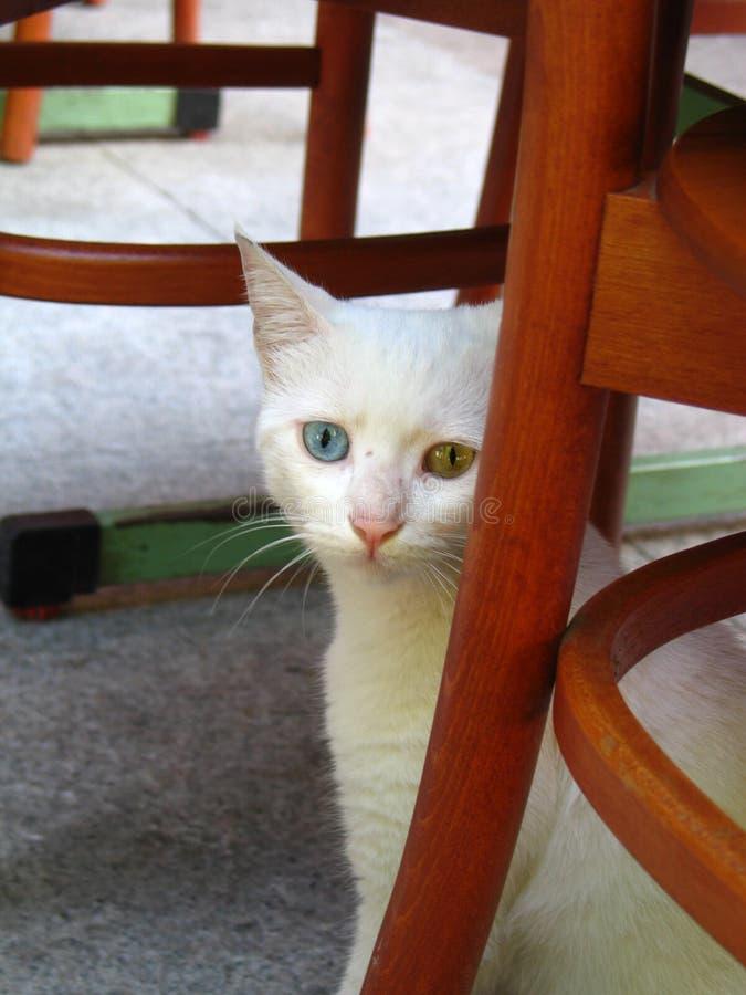 Free Sad Cat Stock Images - 1125544