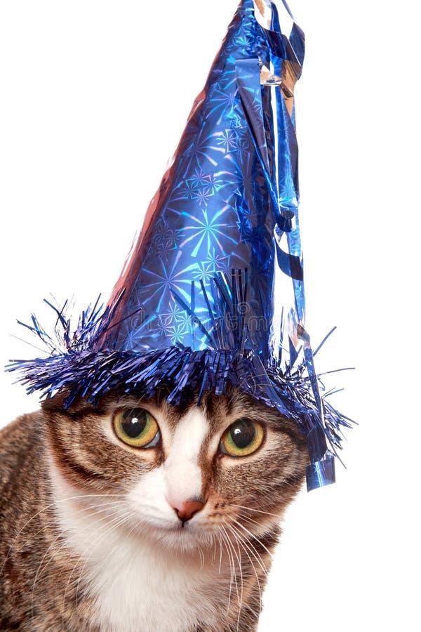 Sad cat in a festive hat