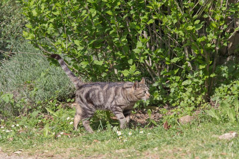 A sad cat is walking in garden in a sunny day stock photos