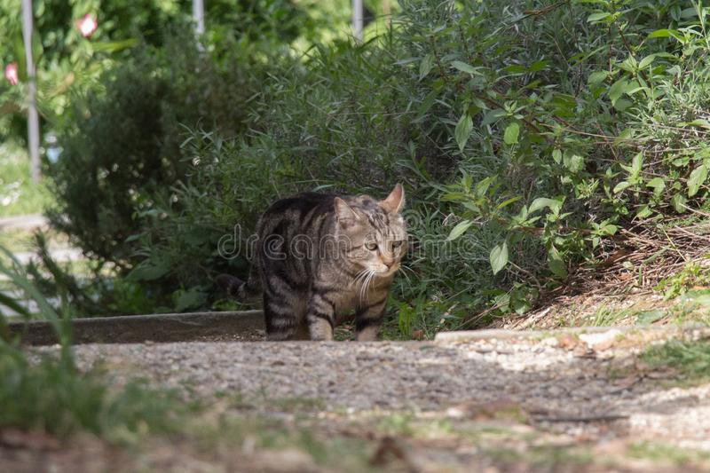 A sad cat is walking in garden stock photography