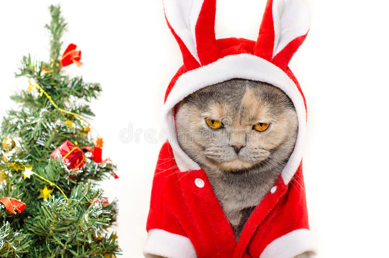Sad Christmas cat. Dressing up in red rabbit costume stock photo
