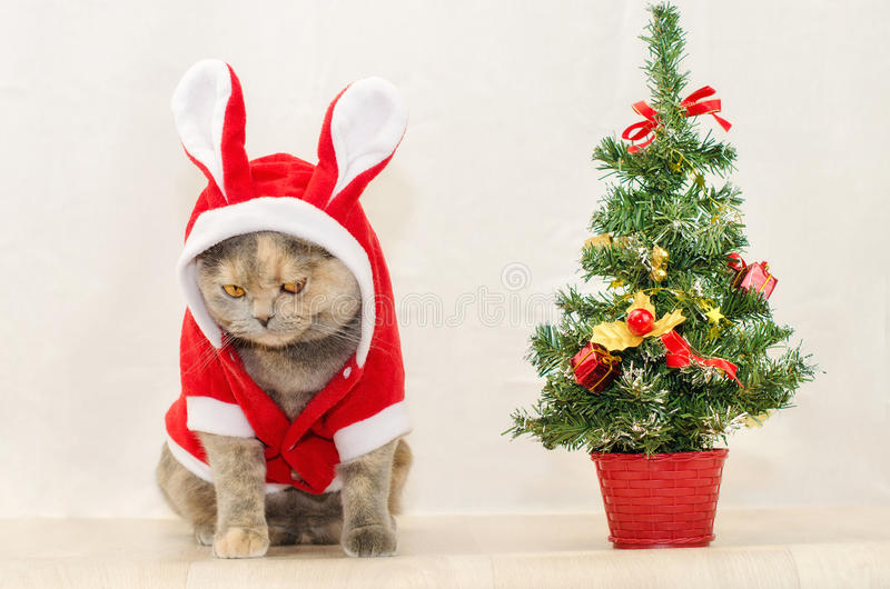 Sad christmas cat. Dressing up in red rabbit costume and sitting near Christmas tree stock images