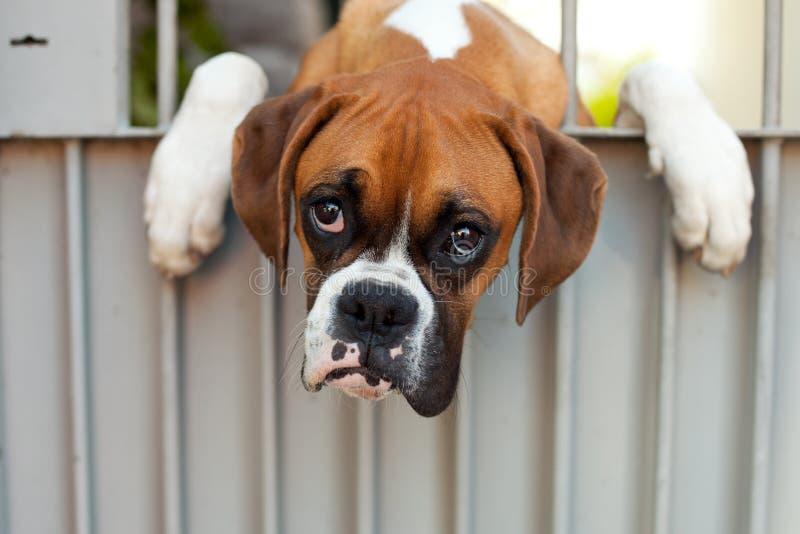 Sad dog royalty free stock photography