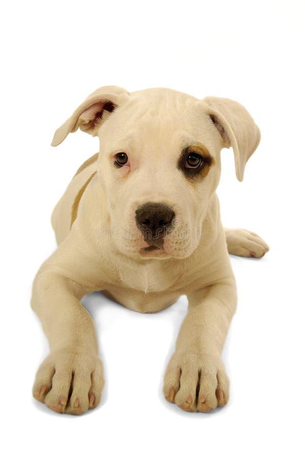 Sad dog stock images