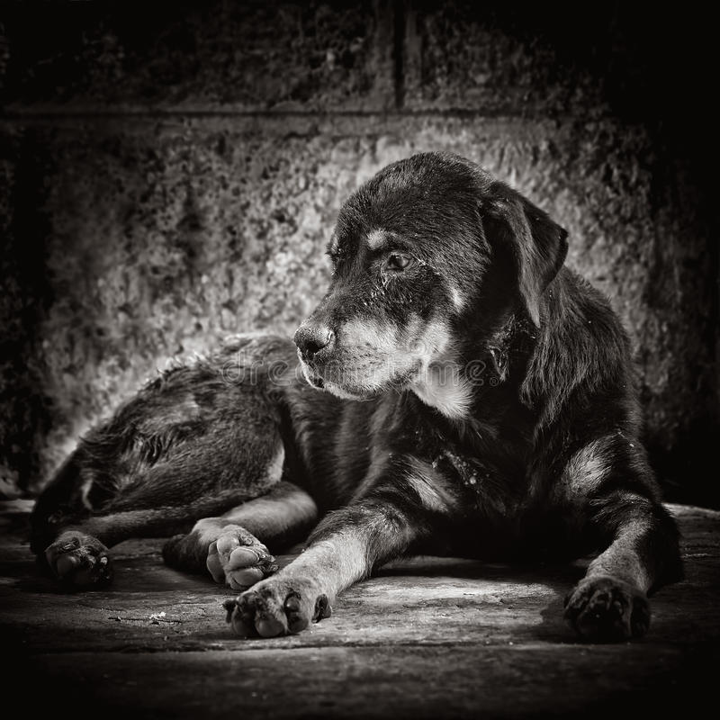 Sad dog abandoned on the streets. Blacj and white image of a dog abandoned o the street stock photo