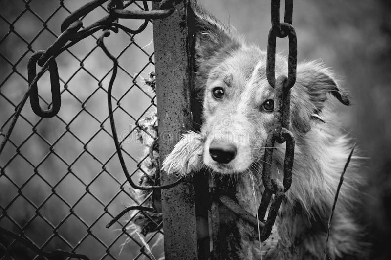 Download sad dog black and white stock image image of cage fear 25558531