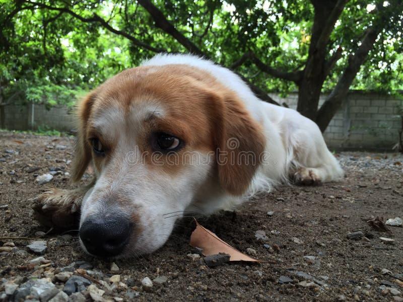 Sad dog. The dog feel sad after owner complain royalty free stock photo