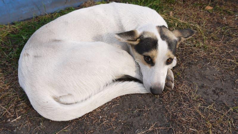 Sad dog on the grass. stock photos