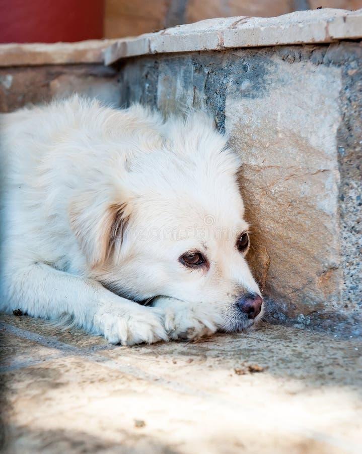 Sad dog lies on the ground stock photos