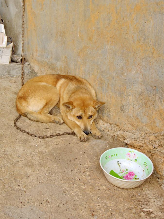 Sad Dog in the local village in Da Lat City. Travel in Vietnam i. N 2012, 5th December royalty free stock image