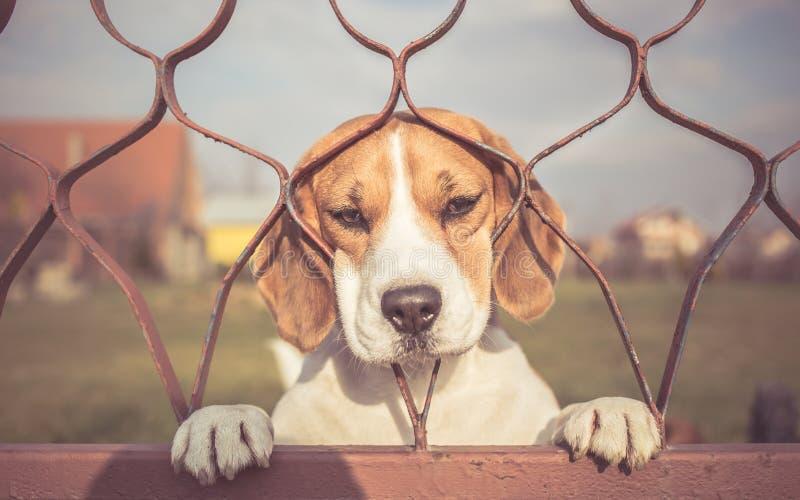 Sad dog looking through gate stock photo