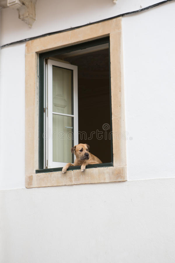 Sad dog looking out of the window royalty free stock photo