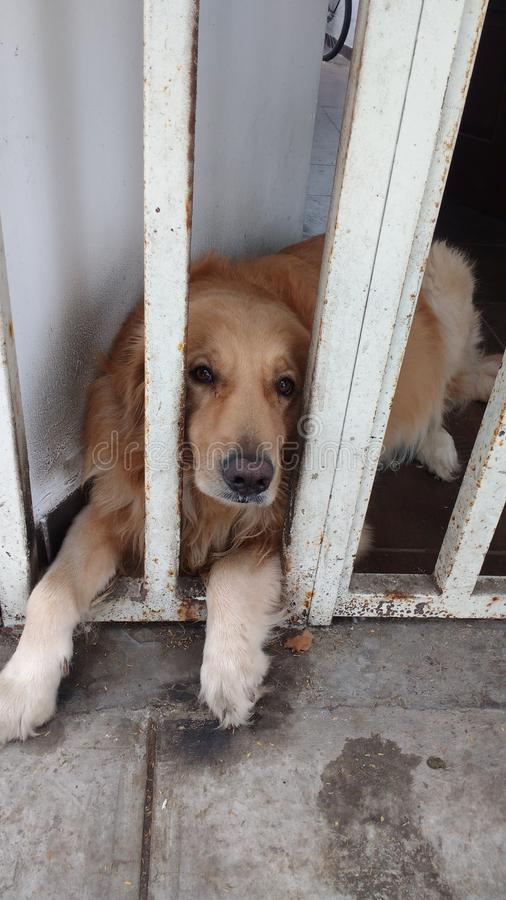 Sad dog in prison royalty free stock images