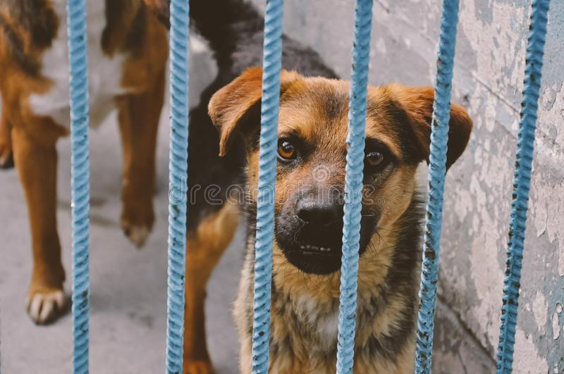 Sad dog puppy in animal shelter stock images
