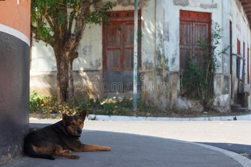 Sad dog on the street of Juayua village stock photo