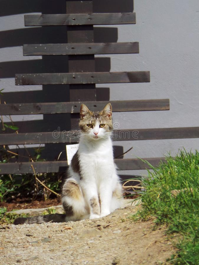 Sad domestic white and grey cat sitting on the groud. Portrait royalty free stock photo