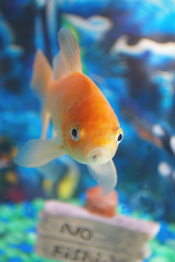 Sad fish. royalty free stock photos