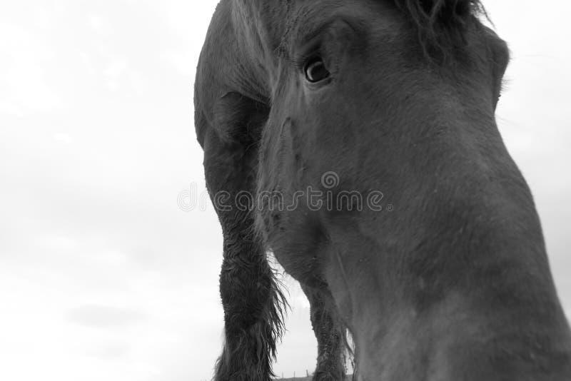SAD häststående arkivbild