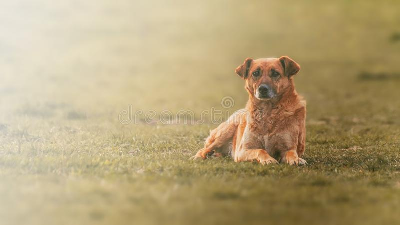 sad homeless dog face sitting on the street with blurred background stock photography