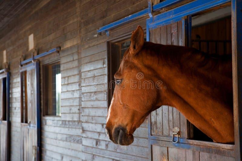 Sad horse royalty free stock images